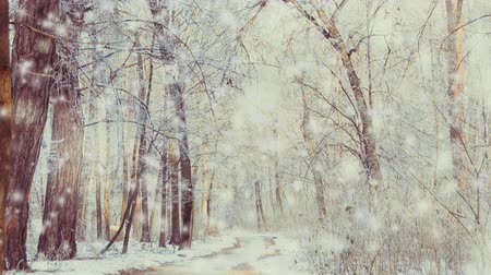 gif : Snow-covered trees in the forest. Forest Park in Winter on a Sunny Day During a Snowfall. Christmas Winter New Year Scenery background. Seamless loop, concept