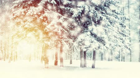 gif : Beautiful snow-covered trees spruce in the forest in winter during a snowfall. Sun, sunny day, sun rays, sunny spot. Fantastic Fairytale Magical Landscape. Christmas Winter New Year Scenery background Stock Footage