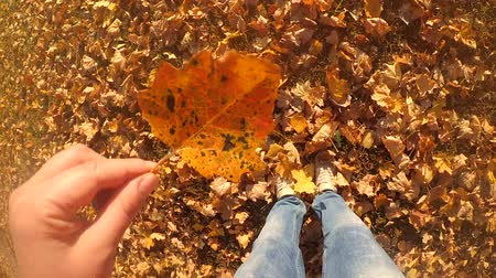 fallen leaves : Slow motion POV of girl who is standing and considering a leaf of poplar in her hand. Person walking in the park in autumn. Rest relax vacation holiday.