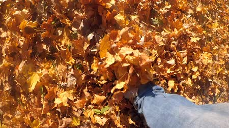 on nature : Slow motion POV of man who walking on ground with fallen yellow and withered leaves on sunny autumn day. Person walks in the park in autumn. Rest relax vacation holiday.