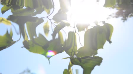 linden : leaves on a branch against a clear blue sky with sun shining, HD 1080. Reflection in water, underwater water ripples surrealism abstract waves Stock Footage
