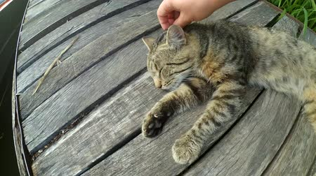žehlení : Girl strokes cat lying wooden surface of old wooden planks warm summer day. Concept of gentle warm relationships between animals and people
