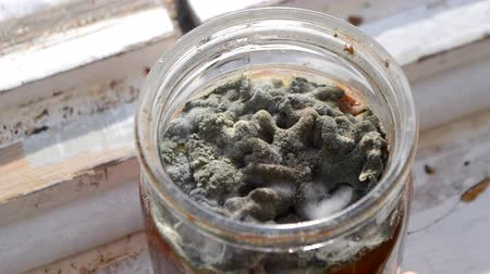 уродливый : Mold in a can. Mildew in the bank. Fungus close-up. Person turns in her hand a jar of mold