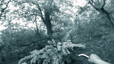 mtb : Person cycling on bicycle ride green forest on sunny day. Biking on path in forest. Point of view pov mtb gopro action camera. Blue and white color