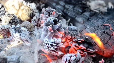 engulfed : Pine cones burn in the fire close-up. Fir tree pine cones burn in a wood. Close-up of burning pine cones. Decoration background. Group of dry cones are engulfed in flames