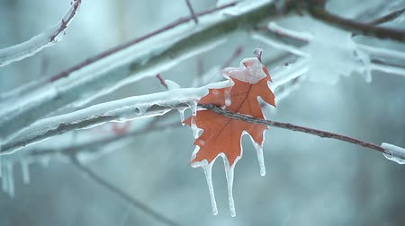 last autumn leaf on a tree branch in the icy snow