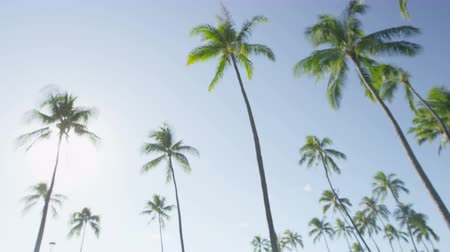 Тропический климат : Palm trees and clear blue sky defocused out of focus blurry background of tropical paradise beach.