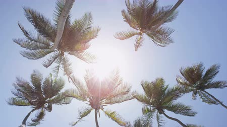 coconut palm tree : Palm trees background in sun flare - tropical summer concept. upward view of tall flowing coconut trees in the fresh breeze against a perfect blue sky in the Caribbean. Tropics exotic destination Stock Footage