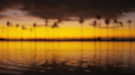 фокус : Beach sunset with tropical palm trees background defocused out of focus. Summer travel holidays vacation getaway colorful video from sea ocean water.