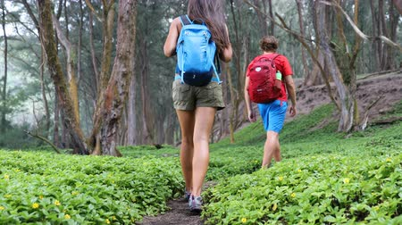 hareketli : Hiking people on hike on green forest path. Close up of legs and hiking shoes Young woman and man walking in healthy lifestyle adventure trekking on Big Island, Hawaii, USA. 59.94 FPS, SLOW MOTION