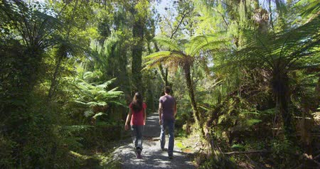 barbone : Hiking people in New Zealand. Hikers hiking in swamp forest nature landscape in Ship Creek on West Coast of New Zealand. Tourist couple sightseeing tramping on South Island of New Zealand. Filmati Stock