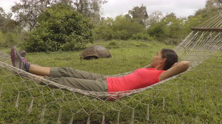 santa cruz : Travel adventure on Galapagos Islands, - tourist woman relaxing in hammock by Giant Tortoise Santa Cruz Island in Galapagos Islands. Stock Footage