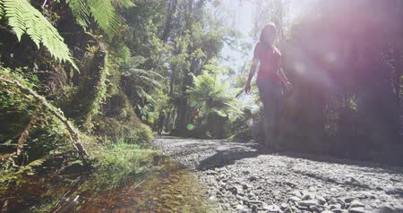 к юго западу : Hikers healthy active lifestyle in New Zealand. People hiking in swamp forest nature landscape in Ship Creek on West Coast of New Zealand. Tourist couple sightseeing tramping on New Zealand.