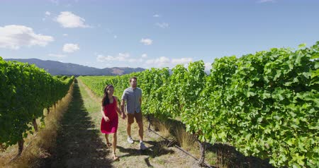 vinná réva : Romantic couple holding hands in vineyard walking by grapevines on wine tour in wine region visiting winery. People on holiday enjoying wine tasting experience in summer valley landscape. SLOW MOTION.