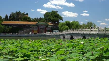 gongyuan : Chinese garden in Beijing - famous public park. Giant water lily plants, bridge and traditional building on beautiful blue sky summer day in Beijing, China. Used by locals and a tourist destination. Stock Footage