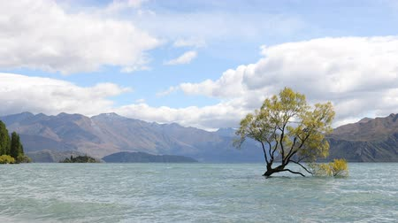 言うこと : New Zealand landscape nature - lone tree of Lake Wanaka famous tourist attraction. THAT WANAKA TREE. 動画素材