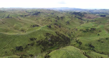 branco : Sheep on grass farmland in the idyllic hills of countryside of north island of New Zealand. Aerial drone footage video. Filmati Stock