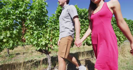 viticultura : Couple on wine tour holding hands while walking by grapevines. Man and woman are exploring vineyard together. They are spending leisure time in summer vacation.