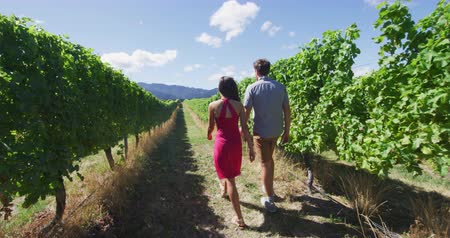 parreira : Vineyard people - Couple on wine tour holding hands while walking by grapevines. Man and woman are enjoying vineyard together spending leisure time on summer vacation. SLOW MOTION.