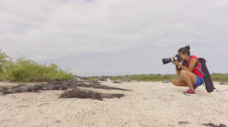 игуана : Animal wildlife nature photographer and tourist taking picture of Galapagos Christmas Iguana on Galapagos cruise ship adventure travel holidays vacation, Espanola Island, Ecuador South America