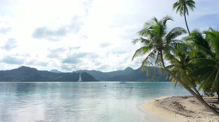 bora bora : Tropical island paradise palm tree beach video from French Polynesia of Motu Mahaea, Tahaa, Tahiti. Drone video of atoll with palm trees, turquoise blue water, coral reef lagoon, South Pacific Ocean.