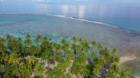bora bora : Tropical island paradise - Aerial drone video from French Polynesia of Motu Mahaea, Tahaa, Tahiti. Aerial view of atoll with palm trees, turquoise blue water in coral reef lagoon, South Pacific Ocean. Stock Footage