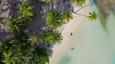 Мальдивы : Tropical island paradise with woman in bikini and palm trees in drone aerial beach video palm trees, turquoise blue water, coral reef lagoon. Top view of woman swimming relaxing Стоковые видеозаписи