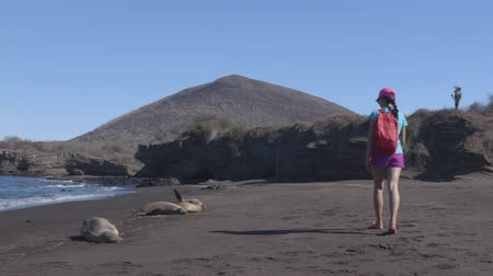 ecuador : Galapagos cruise ship tourist walking on beach with animals, sea lions on Santiago island, Galapagos Islands, Ecuador. Stock Footage