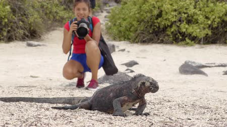 cristatus : Galapagos Islands Christmas Iguana and tourist wildlife photographer taking picture. Marine iguana on Espanola Island, Ecuador, South America. Woman on Galapagos cruise ship travel holidays vacation.
