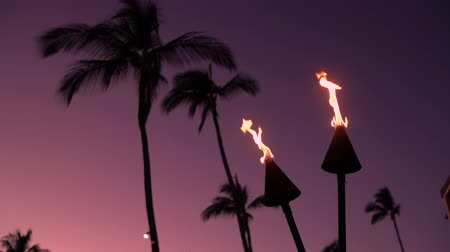 гавайский : Torches with fire and flames burning in Hawaii sunset sky by palm trees. Beautiful torch on Hawaiian beach Стоковые видеозаписи