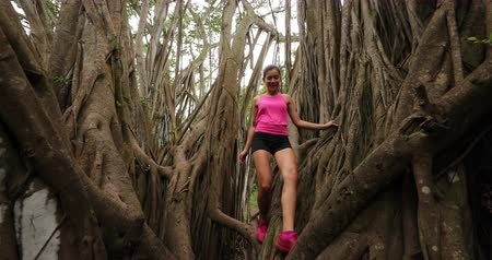 banyan : Woman climbing in banyan tree during hike and run on Oahu, Hawaii, USA. Fitness woman hiking and training and living healthy active outdoor lifestyle in SLOW MOTION. 59.94 FPS. Stock Footage