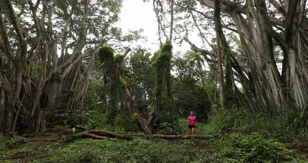 banyan : Woman running in forest by banyan tree fitness training and living healthy active outdoor lifestyle jumping over tree while training. Female trail runner in SLOW MOTION. 59.94 FPS. Oahu, Hawaii, USA. Stock Footage