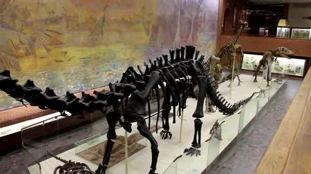 歯を見せる : Moscow, RF - 12052019: Dinosaur skeletons in the Museum of Paleontology in Moscow. Dinosaurs in full growth. Dinosaur bones.