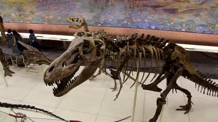 доисторический : Moscow, RF - 12052019: Dinosaur skeletons in the Museum of Paleontology in Moscow. Dinosaurs in full growth. Dinosaur bones.