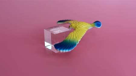 Toy bird balances on the tip of its beak. The bird keeps on a glass cube. Gravity movements. Original toy for children. Pink background. Stock Footage
