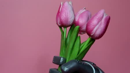 The robot gives flowers. The robots hand holds three tulips. March 8, womens day. Gift. Pink background. Smart robot. Stock Footage