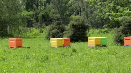 polinização : Multi-colored beehives in the apiary with bees. Beekeeping. Beehives in the meadow.