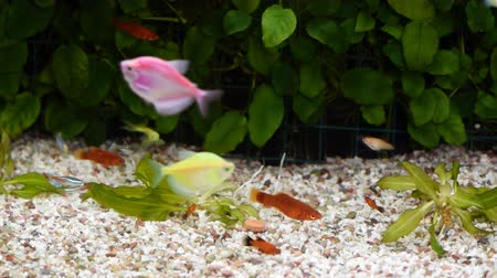 golden color : Diverese fish in an aquarium.