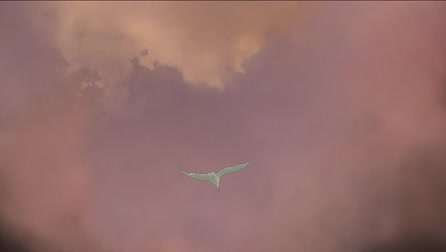 bird fly gull forward clouds sky Stock Footage