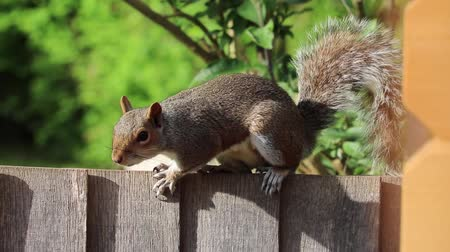 squirrel grey brown fur cute
