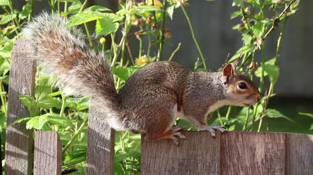cute squirrel grey brown fur