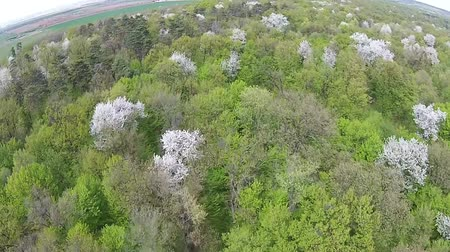 возрождение : Aerial passing over a temperate climate forest in springtime