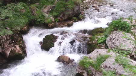 bitkiler : Cold, crystal water of a mountain river rapidly flowing through rocks covered with moss and vegetation Stok Video