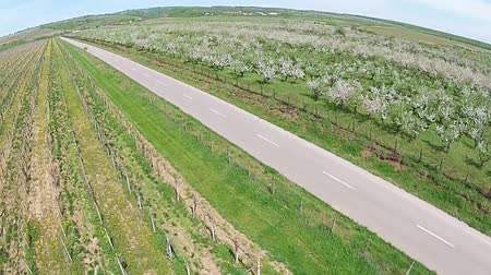 аккуратный : Countryside road crossing between vineyard and blossomed orchard in spring, agricultural landscape aerial view