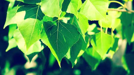 blur : Beautiful green leaves and bright sun over blurred background Stock Footage