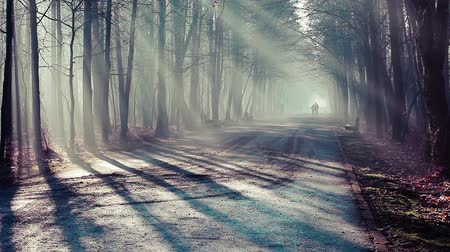 mistério : Road and sunbeams in strong fog in the forest, Poland.