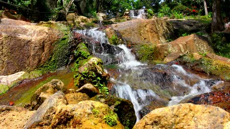 deep forest : Waterfall in deep forest on Samui, Thailand. Video