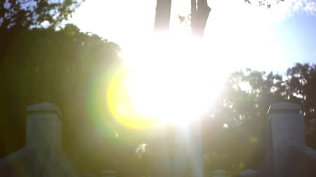 lépcsőfok : Video ascending stairs and a large tree with sunlight in sky. Lense flare effect