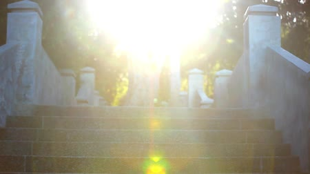 levantar : Video ascending stairs and a large tree with sunlight in sky. Lense flare effect