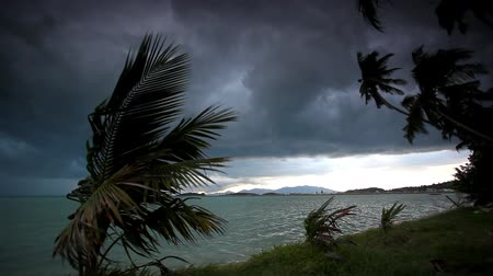 tempestade : Rainy season on tropical region.  Ocean shore in waiting of typhoon at the evening, Palm tree windy. Video